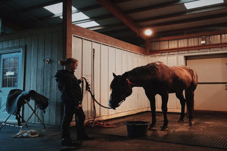 horse niche